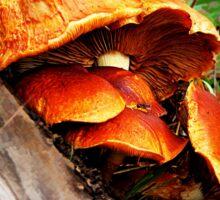 Fungi Sticker