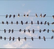 Birds on a Wire by Chaos Delauney