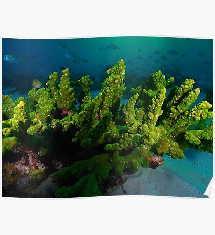 sunset dive 2 warroora lagoon,ningaloo reef Poster