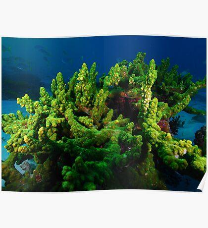 sunset dive 4 warroora lagoon,ningaloo reef Poster