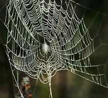 Splendid spider web in autumn morning by Antanas