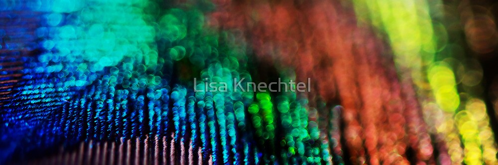 Circles of Confusion by Lisa Knechtel