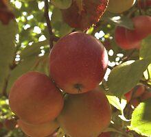 Apples by andreaanderegg