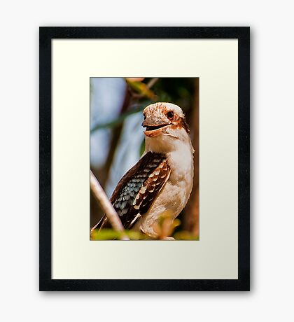 Garden Birds, Laughing Kookaburra Framed Print