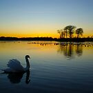 Swan Lake by David Alexander Elder