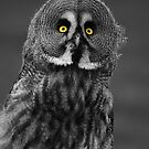 Great Grey Owl by Anne-Marie Bokslag