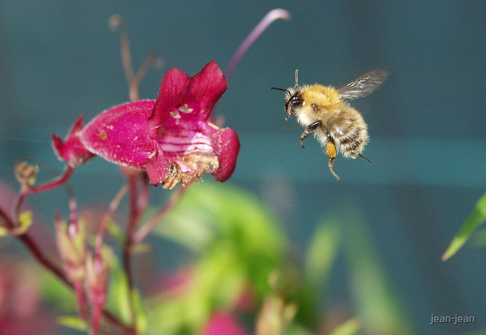 the flight of the bumblebee by jean-jean