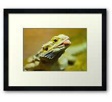 Green Lizard Framed Print