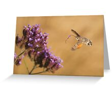 Hummingbird Hawk-moth with Flower stuck on its Proboscis Greeting Card