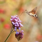 Hummingbird hawk-moth against a Flowery Background by Richard Heeks