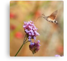 Hummingbird hawk-moth against a Flowery Background Canvas Print