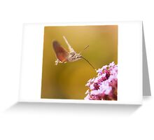 Hummingbird Hawk-moth  Greeting Card