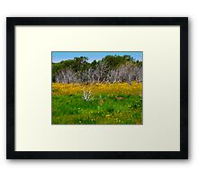 Show Low Country Side Framed Print