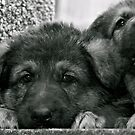 Simply Cute (German Shepherd Puppies) by Lou Wilson