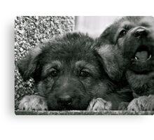 Simply Cute (German Shepherd Puppies) Canvas Print