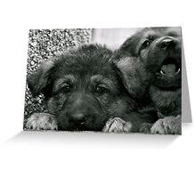 Simply Cute (German Shepherd Puppies) Greeting Card