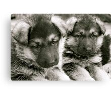 You And I (German Shepherd Puppies) Canvas Print