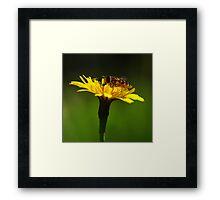 Bee on yellow flower Framed Print