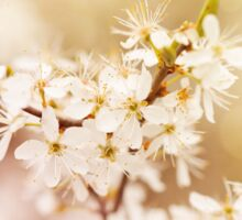 cherry tree young blossoms Sticker