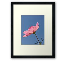 Pink Flower Blue Sky Framed Print