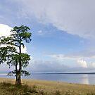 Lone Cypress Tree - Neuse River by NCBobD