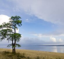 Lone Cypress Tree - Neuse River by NCBobD
