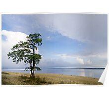 Lone Cypress Tree - Neuse River Poster
