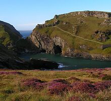 Heather at Tintagel - Cornwall by Kat Simmons
