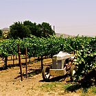 tractor among the vines by marcy413