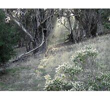 First Light Breaks Through Photographic Print