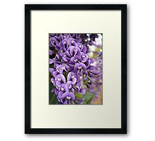 Australian Native Plants 11-20 Framed Print