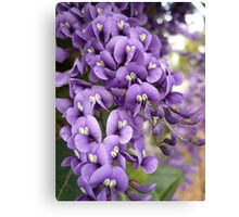 Australian Native Plants 11-20 Canvas Print