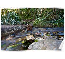 Woolgoolga Creek Poster