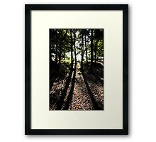 Shadows in the woods. The Wrekin Shropshire. Framed Print