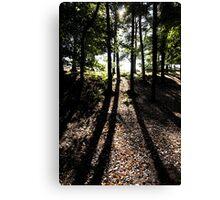 Shadows in the woods. The Wrekin Shropshire. Canvas Print