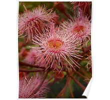 Australian Native Plants 13-20 Poster