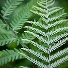 Abstract Ferns - Croatan National Forest by NCBobD