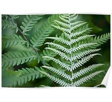 Abstract Ferns - Croatan National Forest Poster