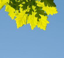 Bunch of green oak leaves Sticker