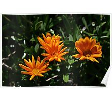 Flowers at Varsity Lakes Poster