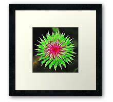 Purple Thistle Flower Framed Print