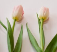 Four Tulips Sticker