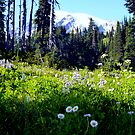 Mid September wildfowers on Mount Rainier! by Elaine Bawden