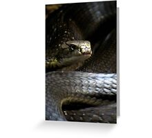 King Cobra Greeting Card