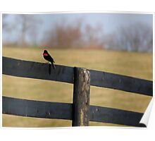 Redwinged Blackbird on Fence Poster