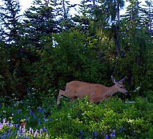 """""""Deer"""" by Lynn Bawden"""