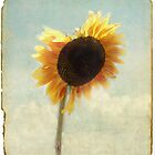A Sunflower Grows by Rozalia Toth
