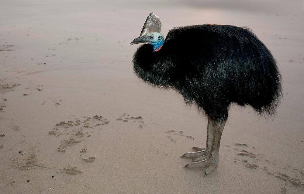Ms Etty - cassowary on the beach by Jenny Dean