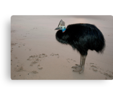 Ms Etty - cassowary on the beach Canvas Print