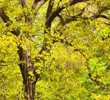 Large spring oak tree Sticker